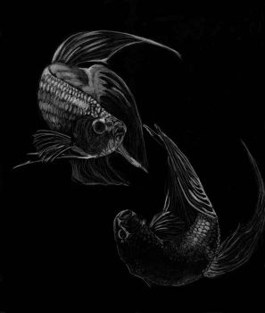 Bettas by ferencfile