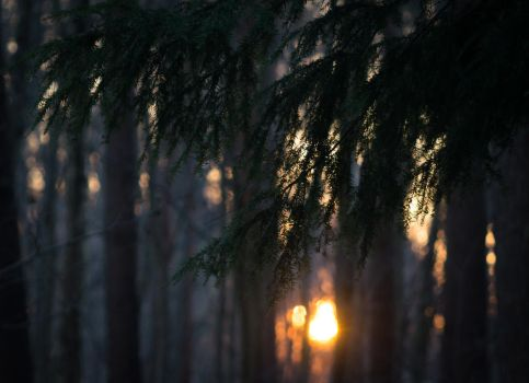 In the pines, in the pines by VohuManah