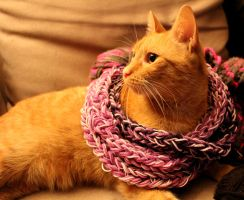 Artsy-Fartsy  Cat-Scarf by chaosqueen122
