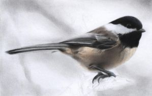 Black-capped chickadee 2 by Isadorrah