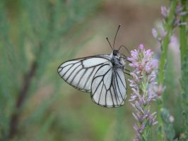 Stock: White butterfly by Think-Outside-Of-Box