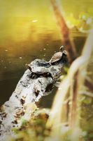 Two Turtles Hanging Out by EmileeSelf