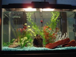 Fish tank updated by Mel-at-ne