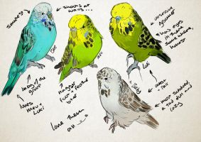 My budgies- sketches by Cato-Jukes