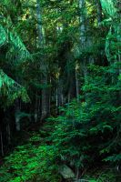 Emerald Forest by KRHPhotography