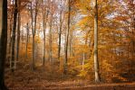 Automne-18 by Fred93