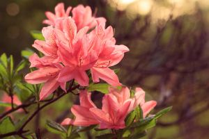 Flowers by Palanteer