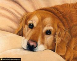 Couch Potato 10x8 Colored Pencil by JoshuaHendry