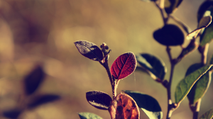 Heavenly Divine by atLevel1Alt