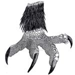 Eagle Claw Drawing at GetDrawingscom  Free for personal