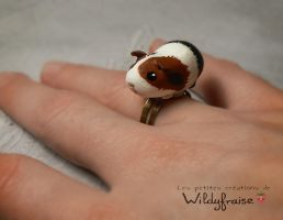 Guinea pig ring by Wildyfraise