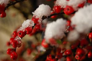 Chilly Berries by AmeliaMartin1989