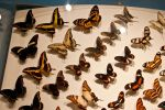 moths and butterflies stock137 by hatestock