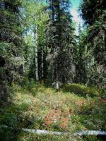 Forest 8 by prints-of-stock