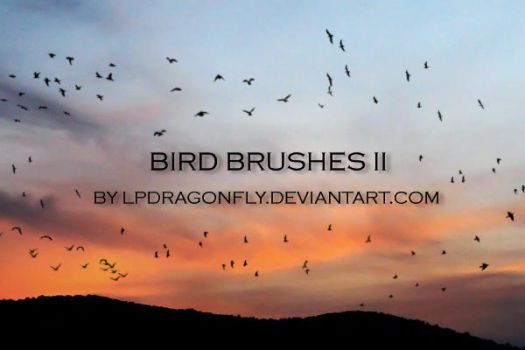 bird brushes by ivadesign