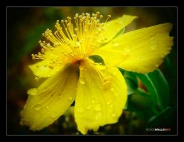 Wet yellow by geograpcics