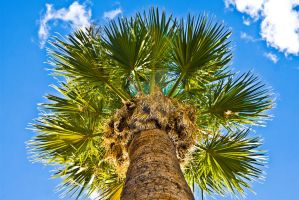 palm tree by orionsbelt42