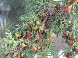 Pine nuts 1 by yasha1992sStock
