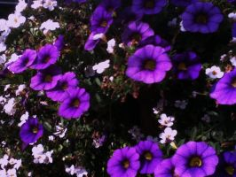 The color purple by kate131