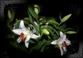White Passion 5 by gors