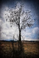 Leafless by Avalong