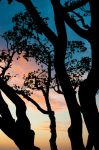 Sunset among the trees by c1rcu1tn3rd