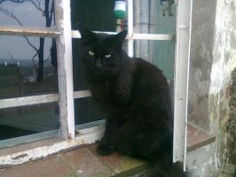My Kitty by the Window by NikoBanks