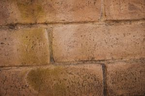 Mossy Bricks After The Rain by stock-pics-textures