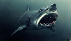 Great White by lberry1976