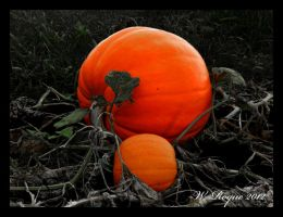harvest by wroquephotography