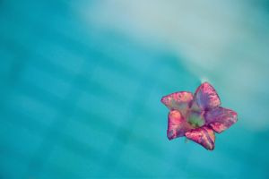 Flower in the pool by oderycke