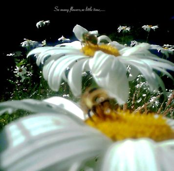 So many flowers,so little time by Marcher