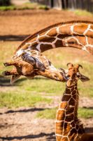 Mothers Love by 904PhotoPhactory