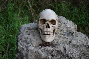 Human Skull 013 - HB593200 by hb593200