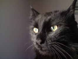 that is my cat mr.tom by subhy