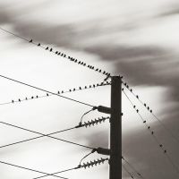Birds on a Wire by TMPhotographia