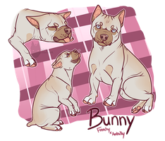 Bunny- Premande Character for Sale- Closed by PittMixx