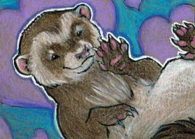 Ferret ACEO  2 by Stormslegacy