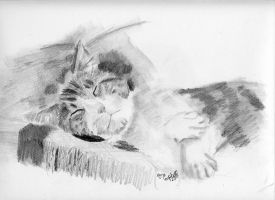 Catnap by redcat1887