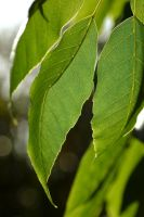 Leaves in the Sunlight by Mitchography