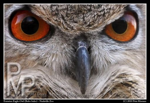 Eagle-Owl Extreme Close-Up by UrsusAmericanus