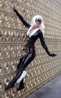 Black Cat 8 by AlisaKiss