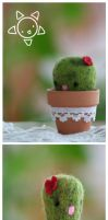 Cactus PinCushion by xXScarletButterflyXx