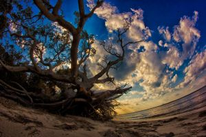 uprooted 2 by denehy