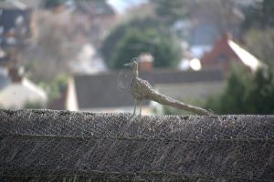 bird on a wire by poupon82