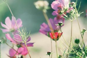 Day 251: September Flowers by Kaz-D