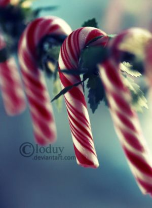 Candy Canes by cloduy