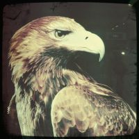 Golden Eagle by Eonity