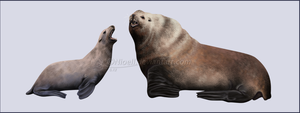 Steller's Sea Lion by Nioell