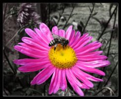 The Pollination BWC by AlexandruGatea